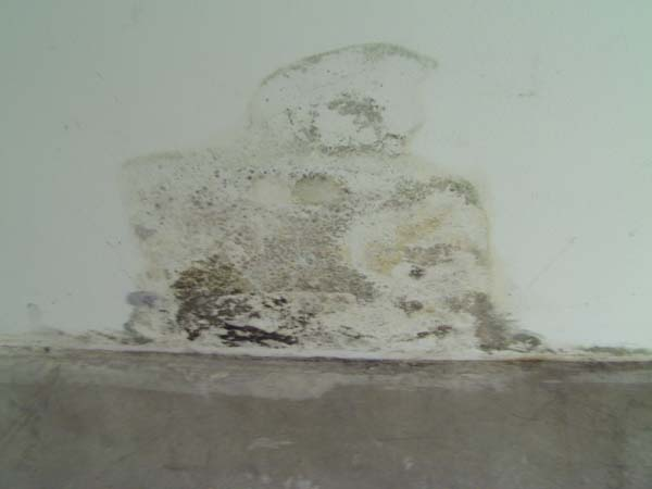 mold due to bad waterproofing