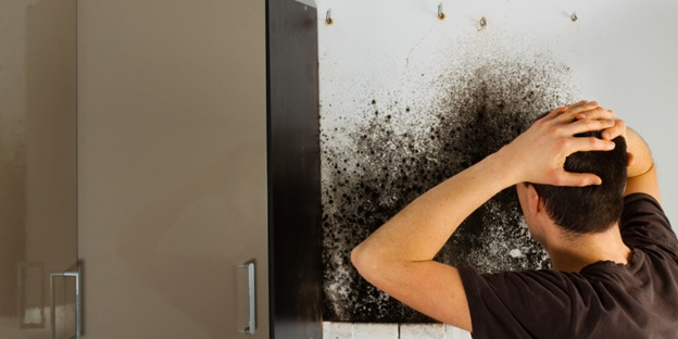 mold remediation and removal Los Angeles