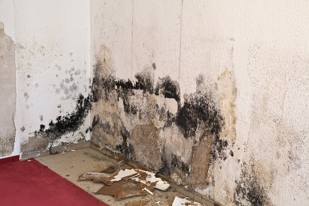 Los Angeles Home Water Damage FAQs