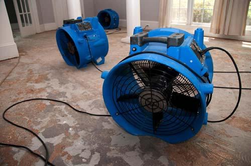 Understanding Mold Remediation
